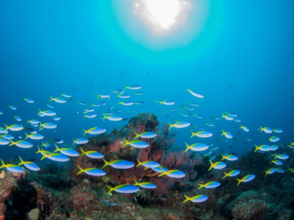 コーラルと魚いっぱいのパプアニューギニアの水中世界へ、もちろん戦跡ダイビングもリクエスト可能です